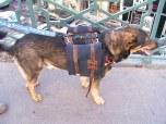 sacoche pour chien